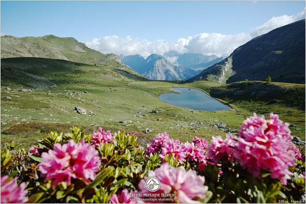 Rhododendron et lac de la Barre