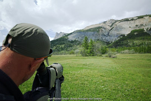 ornithologie serre chevalier oiseau montagne