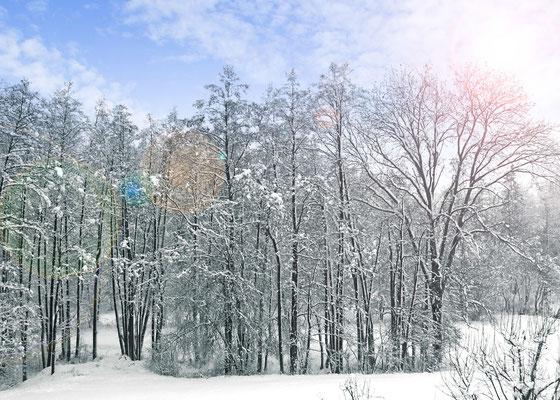 Bereits im Winter können in Ruhe Ideen gesammelt werden