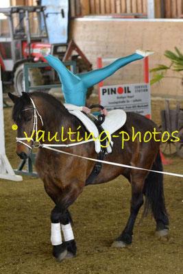 JPSV Pahren; Pferd; Satchmo; Longe: Jana Knoche