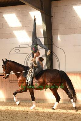 Krumke II; Pferd: Newmix; Longe: Marion Schulze