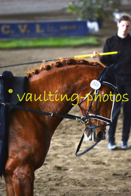 Theresa Neugebauer/Teresa Krispel (AUT); Pferd: Ramazotti; Longe: Melanie Neubauer