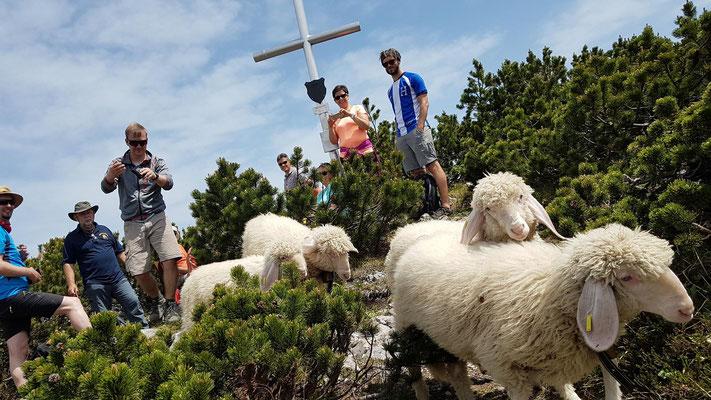 Besuch am Gipfelkreuz