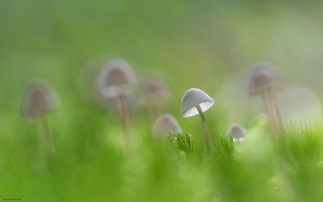 Nature (de)light