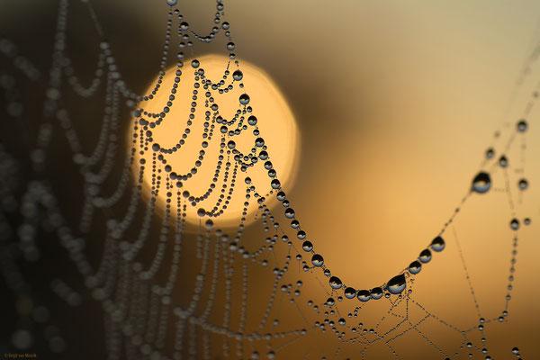 Sun web