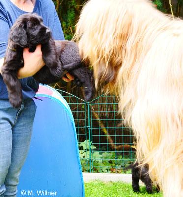 Begrüßung BenBen und Baby