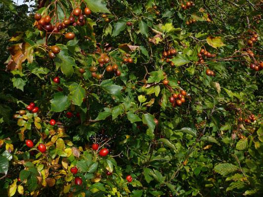 Fruchtpotpourri
