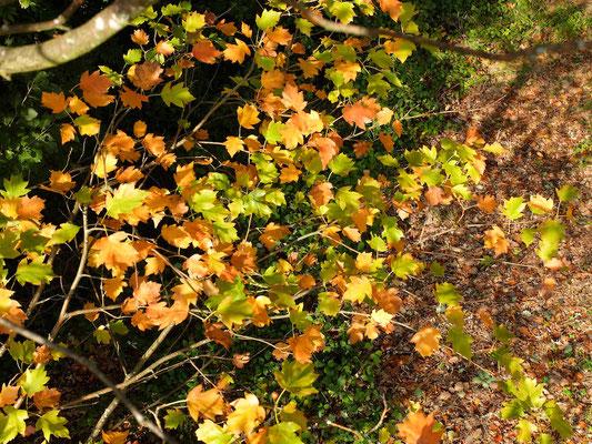 Blätterstimmung