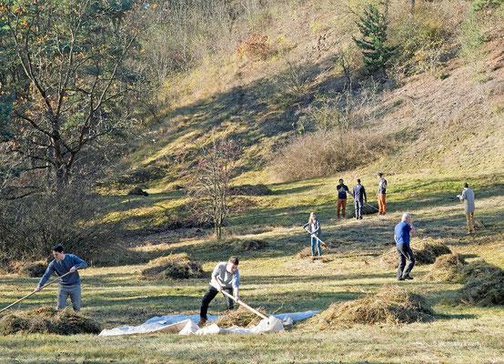 Pflegeeinsatz am Krielower Berg- Foto: W. Ewert