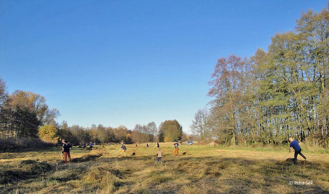 Als Zugabe ein guter Hektar Pfeifengraswiese - Foto: Petra Sell