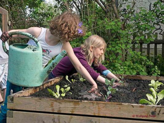 Füllen und Bepflanzen eines Hochbeetes - Foto: Wolfgang Ewert