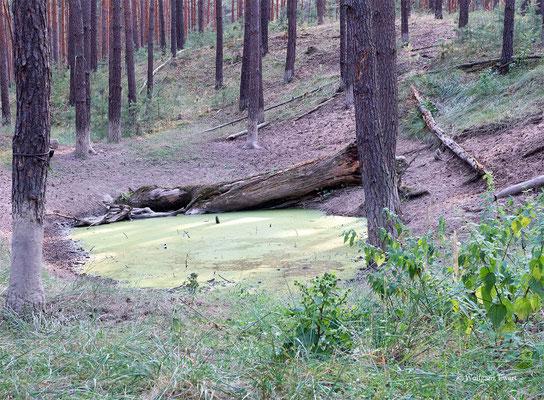 Wasserstelle  -- Foto: W. Ewert