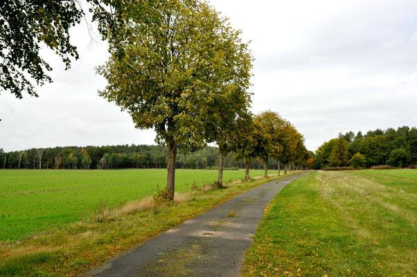 Weg zum Grünen Band hinter Schmölau (nördlich)