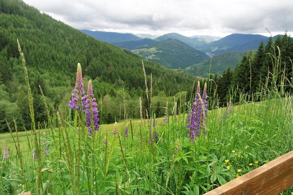 Graier Huabn - Blick ins Metnitztal