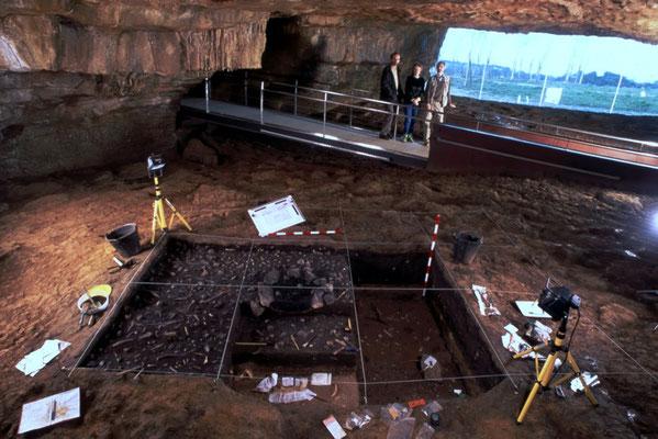 Neo Cueva de Altamira, Museo Nacional de Altamira