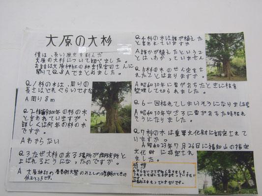 大原の大杉