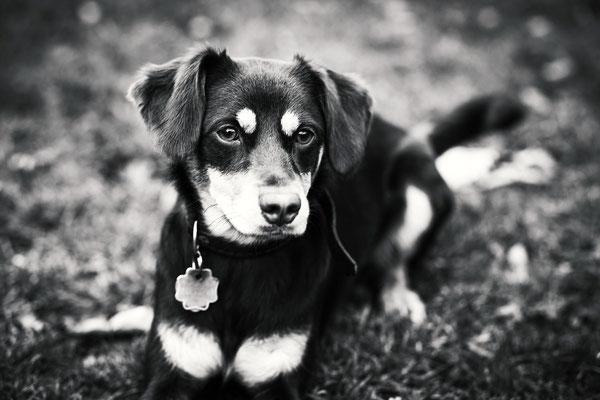 Tierfotografie - Amy