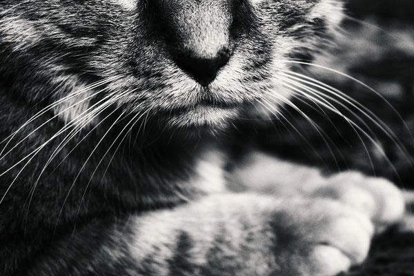 Tierfotografie - Haukater - Felix