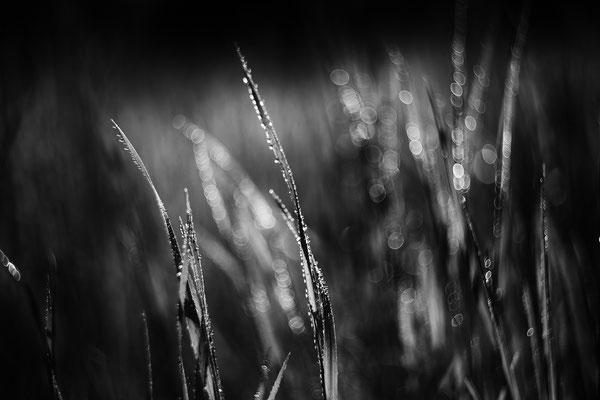 Makrofotografie Schwarz/Weiß