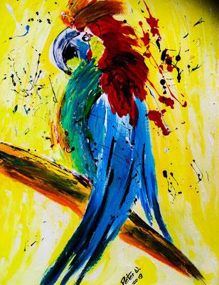 Papagei Acryl auf Leinwand 30 x 40 cm