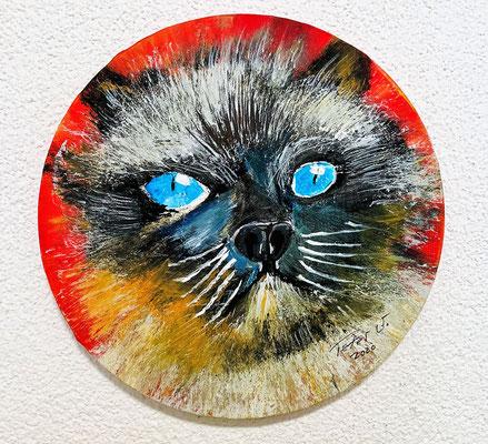 Die Ragdoll Katze