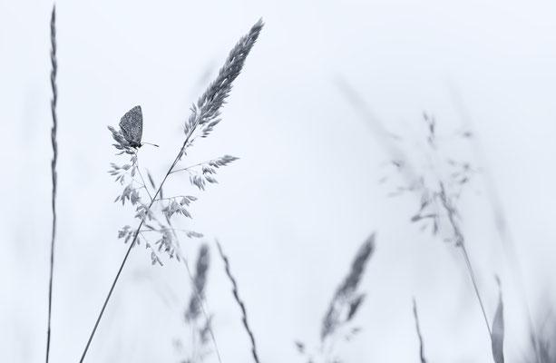 "2017 Naturfoto, 1. Platz Leserbild ""Schmetterlinge"""