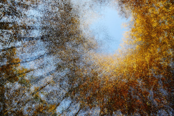 """2016 Naturfoto, 1. Platz Leserbild """"Spielwiese"""""""