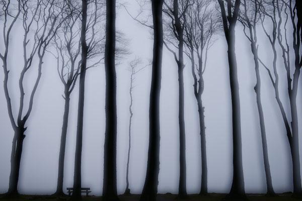 Gespensterwald - Mehrfachbelichtung