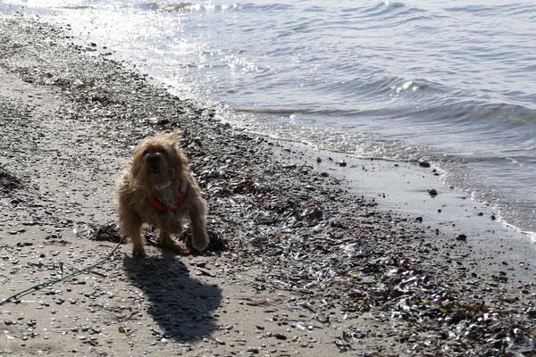 Cheevi hat sichtlich Spaß auf dem Strand