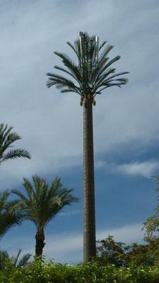 In Marrakech werden die häßlichen Handymasten in künstlichen Palmen versteckt