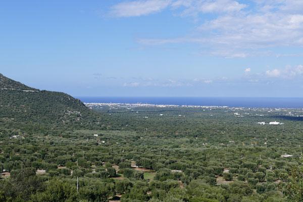 Überall nur Olivenbäume