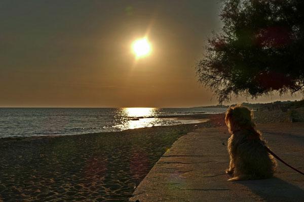 Cheevi ist auch vom Sonnenuntergang begeistert