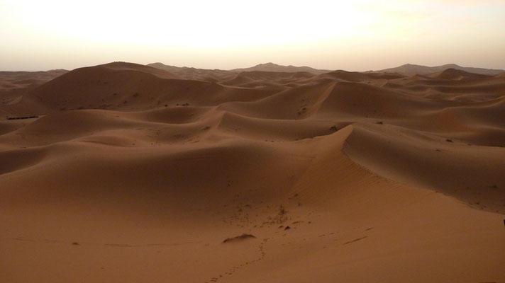 Die Wüstenlandschaft noch vor Sonnenaufgang
