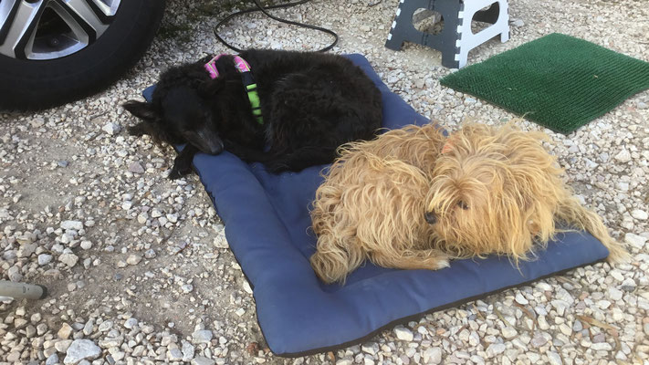 unsere Hunde sind völlig entspannt
