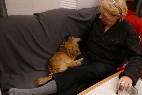 Cheevi darf abends zu uns auf das Sofa. Er liebt es gebürstet zu werden