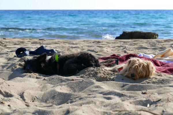 Die beiden Hunde haben sich im Sand eingebuddelt