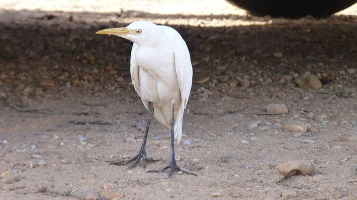 Dieser Vogel schlich vor der Abfahrt ständig um unser Wohnmobil rum. Ob er mit uns mitfahren wollte?