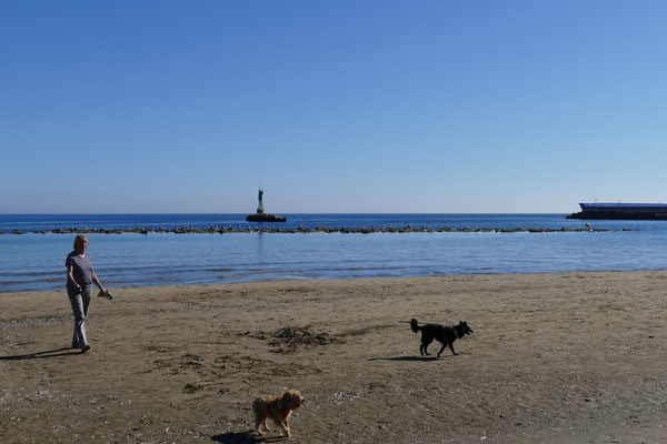 Die Hunde genießen den Strandspaziergang