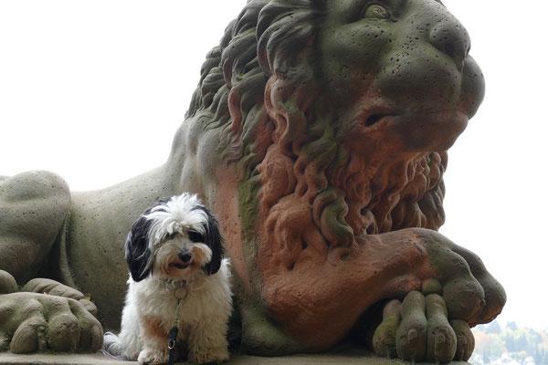 Der große und der kleine Löwe