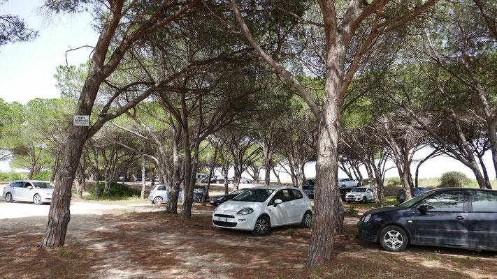 Schattige Parkplätze im Pinienwad vor dem Strand
