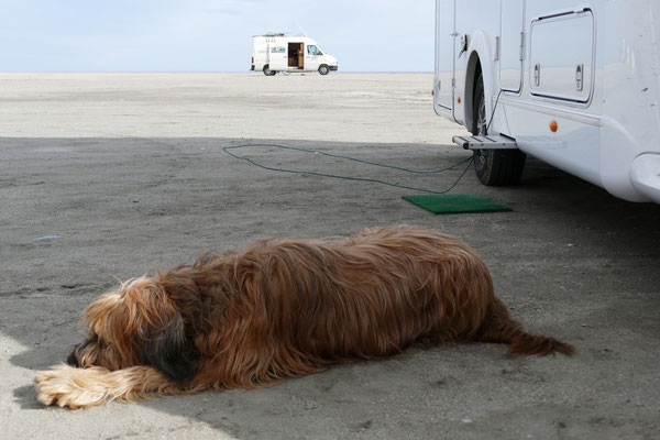 Der Nachbarhund Balou hat uns adoptiert