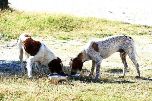 Die Gasthunde
