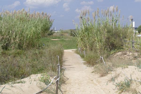 Der Durchgang durch die Düne zum Strand