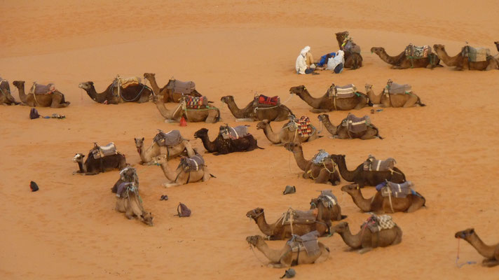 Unser Kamel-Parkplatz