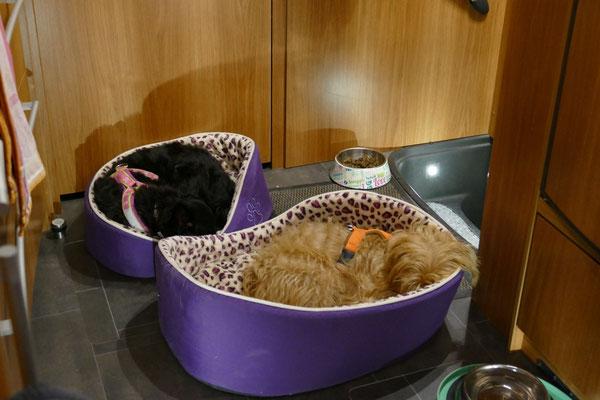Unser beiden Hunde schlafen glücklich in ihren Körbchen