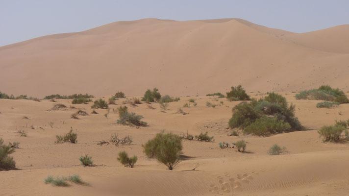 Wüste Erg Chebbi