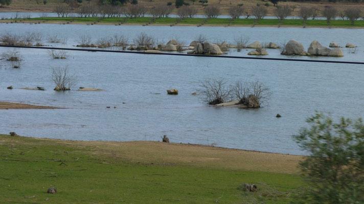 """Am größten Stausee Europas """"Barrogem de Alqueva"""" (Grande Lago) mit einer Uferlänge von 1.160 km"""