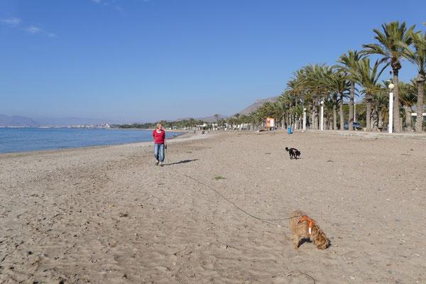 Gaby am Strand vor unserem Stellplatz mit den Hunden