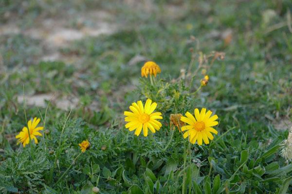 Überall blühen schon die Blumen