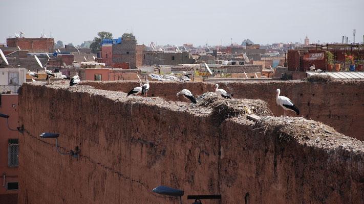 Die Storche nisten auf den Mauern der Palastruine El Badia